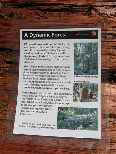 A Dynamic Forest