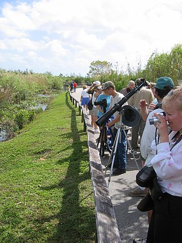 Anhinga Trail Visitors